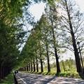 写真: 03 ロード散歩