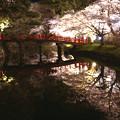 写真: 弘前城夜桜 (鷹丘橋)