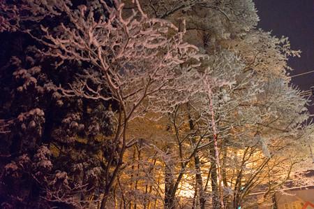 樹氷が綺麗だ