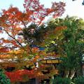 六華苑 庭園の紅葉 IMG_0423_2