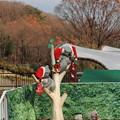 Photos: 動物園もクリスマス