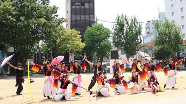 ど祭2017 桜13