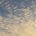 写真: うろこ雲