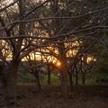 写真: 夕焼け