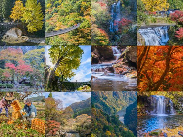 Photos: 秋景(紅葉)collage