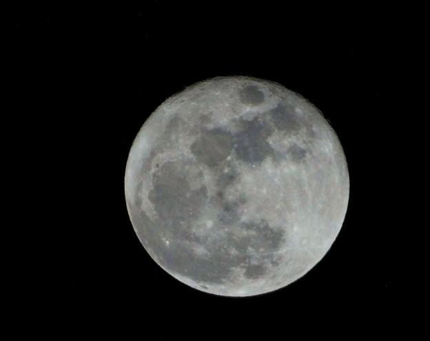 写真: full moon