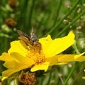 幸福の黄色い花