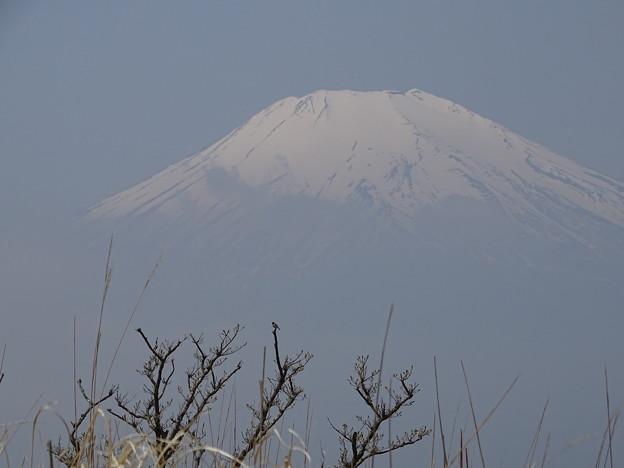 ノビタキのいる風景