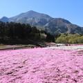 写真: 武甲山と芝桜