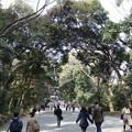明治神宮 (渋谷区代々木神園町)