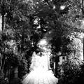 戸越八幡神社 (品川区戸越)