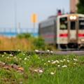 鉄路脇に咲く朝だけの花園
