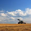 収穫を終えた小麦畑で