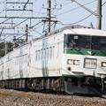 Photos: _MG_3756 185系 成田山初詣横須賀号