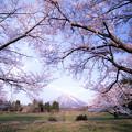 写真: 大山と桜フレーム