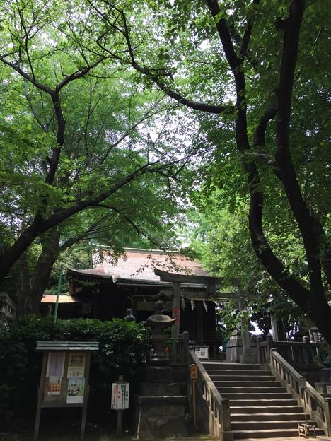 6月_諏方神社 2