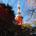 Photos: 12月_東京タワー 2