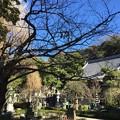 Photos: 12月_常立寺 2