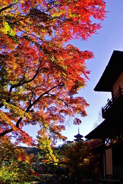 晩秋の三溪園。