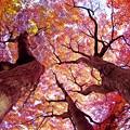 秋景色・舞岡公園/天下は我らにあり。