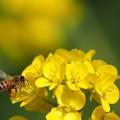 Photos: ミツバチは忙しい・・・