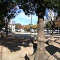 写真: 都町公園 広島市西区都町31 2017年11月12日