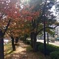 猿猴川 河岸緑地 広島市南区的場町2丁目 的場町バス停の裏手2017年11月9日