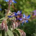 写真: 201104flower 473