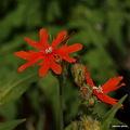 写真: 201105flower 346