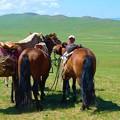 私達の馬と ガイドのバヤちゃんの後ろ姿。