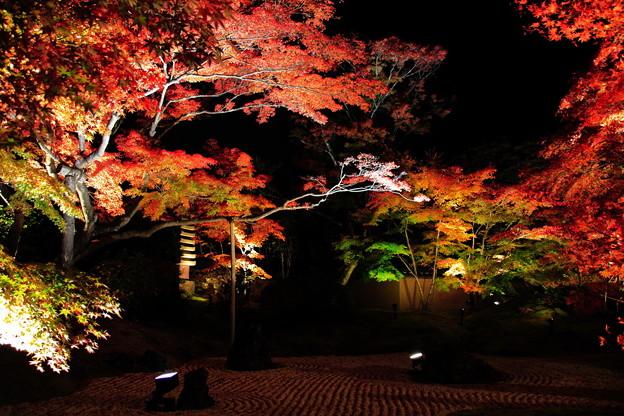 松島円通院ライトアップ1
