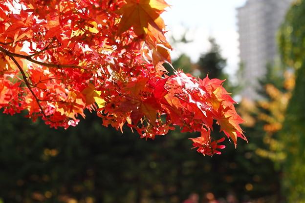 中島公園37