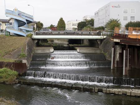 仙川と野川の合流点