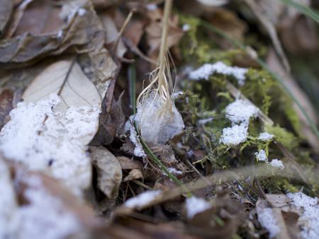 稲荷山登山口付近の霜柱