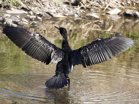 翼を乾かす