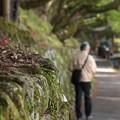Photos: 千光寺へ