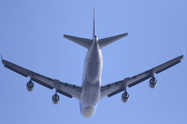 南下する翼