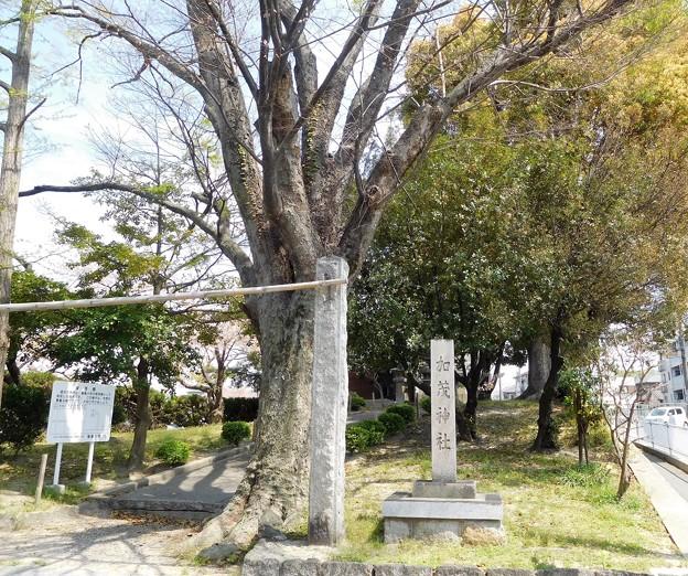 加茂神社(寝屋川市) (1)
