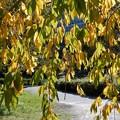 写真: 大阪城公園の紅葉 (4)