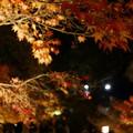 写真: 11月25日