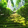 Photos: 杉本寺