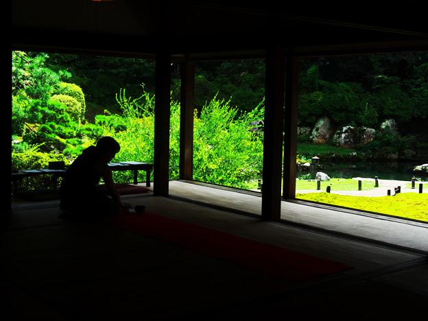 写真: 夏の青蓮院