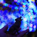 写真: グランモールの小さな遠吠え