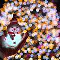 写真: メリークリスマス!