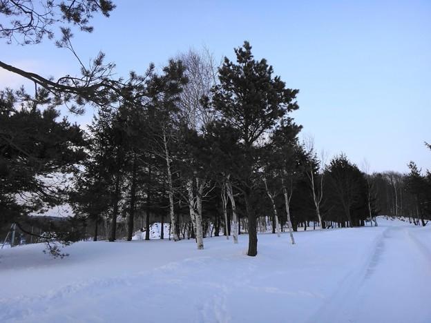散歩コース