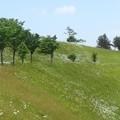 写真: 今日の散歩コース