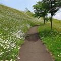 写真: 今日の散歩コース 2