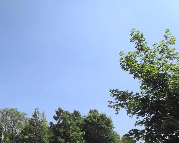 青空が広がって良い天気