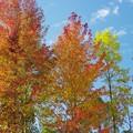 Photos: 紅葉の始まり