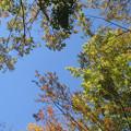 Photos: 秋の樹木
